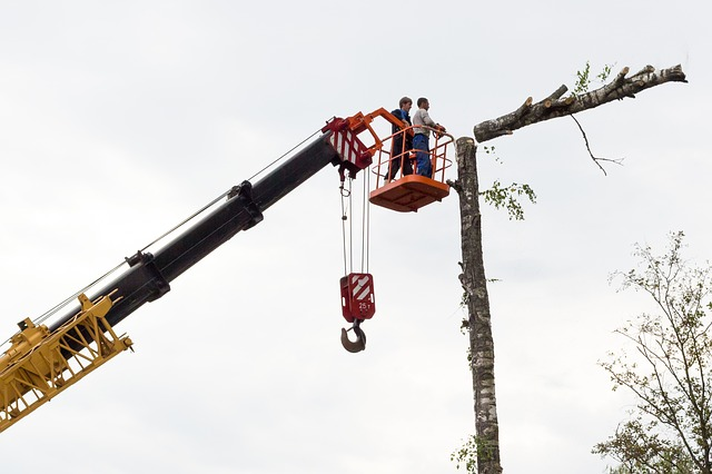 כריתת עצים: איך בוחרים בעל מקצוע ?